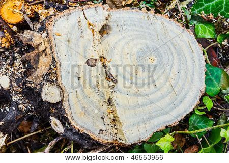 esboço da árvore, desmatamento