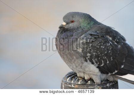Urban Birds.