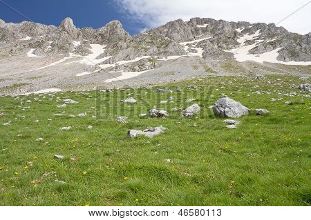 Alpine Meadow And Rocky Summits
