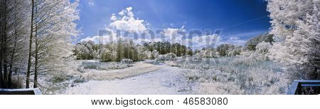 180 degree infrared panorama of lake and forest scene