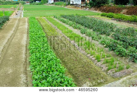 Farm with agricultural product