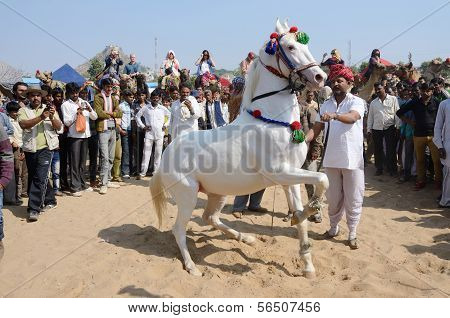 Tribal nomad man taking part at horse dance competition at famous camel fair,India