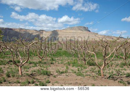 Mt. Garfield Above Peach Orchard