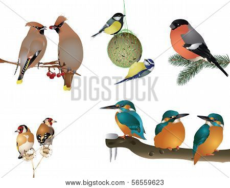Collection of winter birds