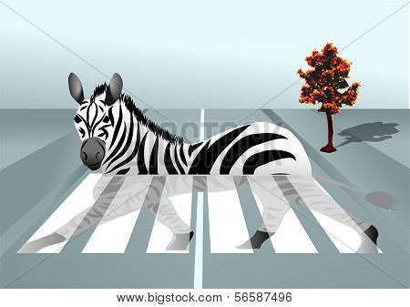 Zebra In The City