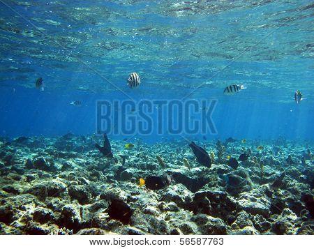 Reef plate