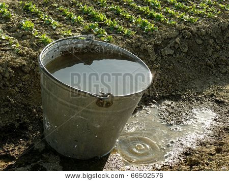 bucket full of water near vegetable bed