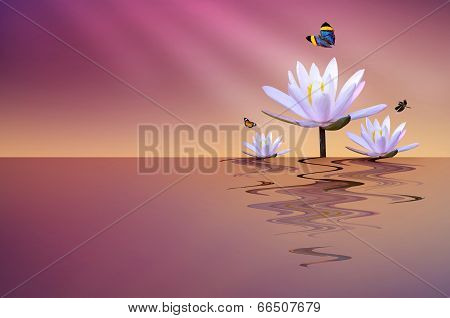 Pink Lotus Pond With Butterfly