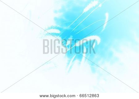 Grass Seed Background - African Plants - Detail of Color and Beautiful Blue