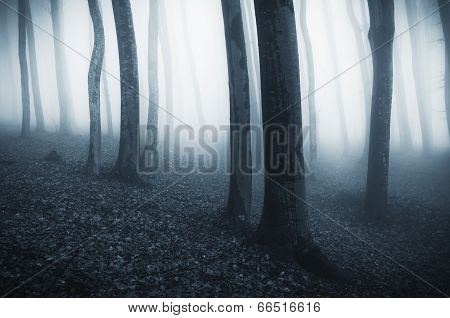 Deep dark woods on Halloween