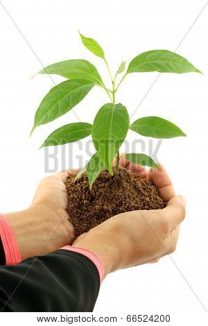 Business Woman Holding Green Baby Plant On White