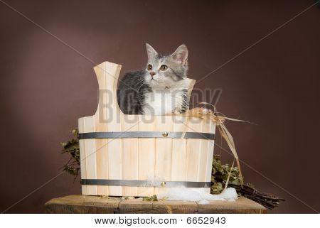Cat In The Bath