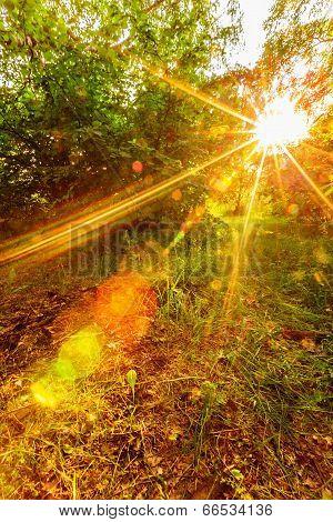 Sunset Sunshine In Forest