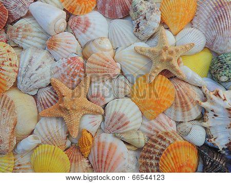 Sea shell background.