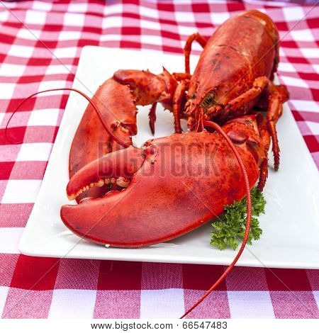 Freshly cooked lobster on a platter.
