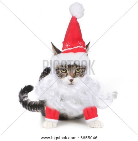 Unhappy Bah Humbug Santa Kitten Glaring At The Viewer