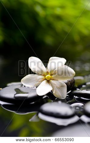 Spa still with gardenia flower on pebbles and green plant