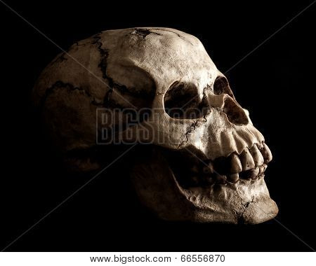 Human Skull Prop On Black Background