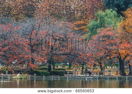 Ueno Park in Tokyo