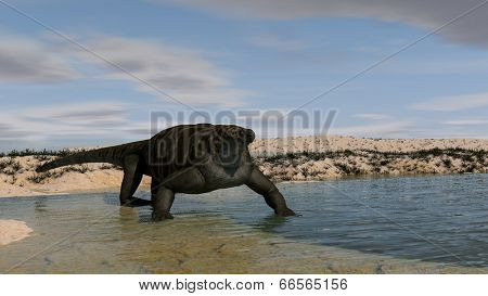 cotylorhynchus on shore
