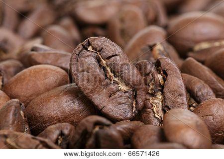 Big Arabica Coffee Beans Background