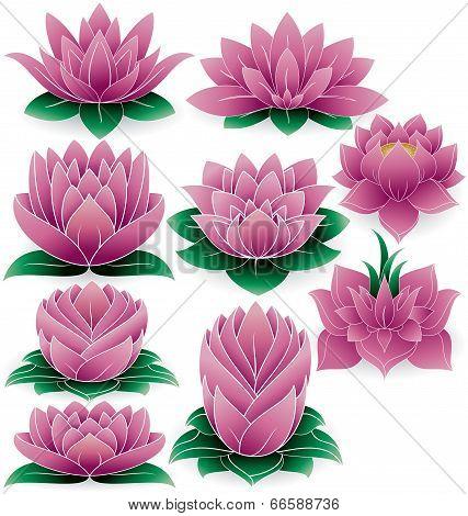 Lotus Flower Colored