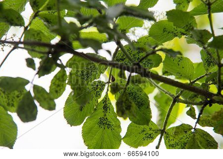 Insects On Green Leaf