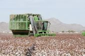 picture of pima  - a cotton picker harvests a cotton field in Arizona - JPG