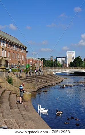 Feeding the swans, Derby.