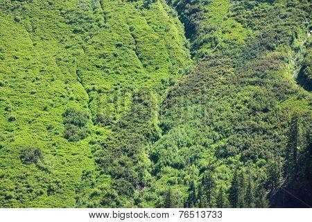 Lush green hills in Washington state