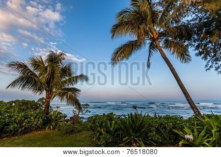 Palm Trees Along The Coast