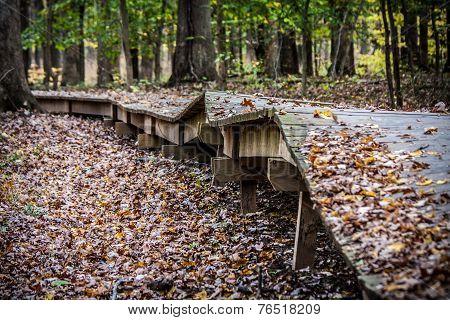 Boardwalk through Forest in Disrepair