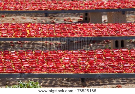 Dried Red Ripe Tomatoes,