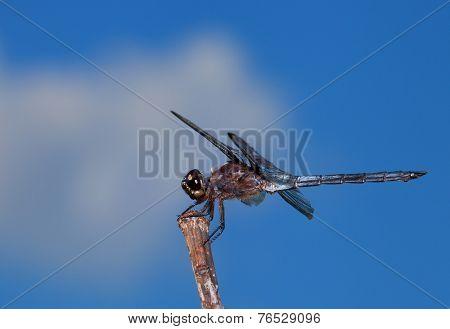 Bug Killer