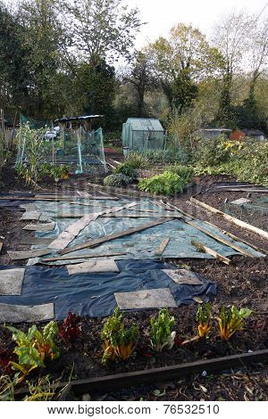 Allotment In Autumn