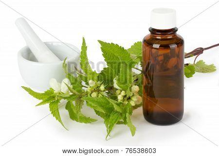 Stinging Nettle Medicine