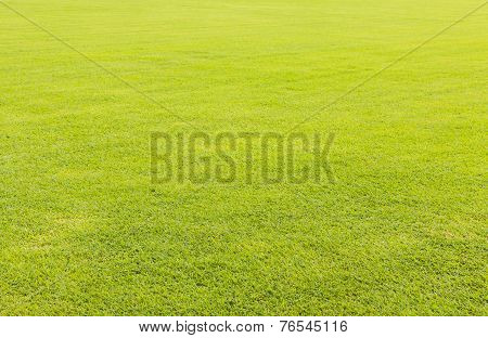 Green Grass Lawn For Background