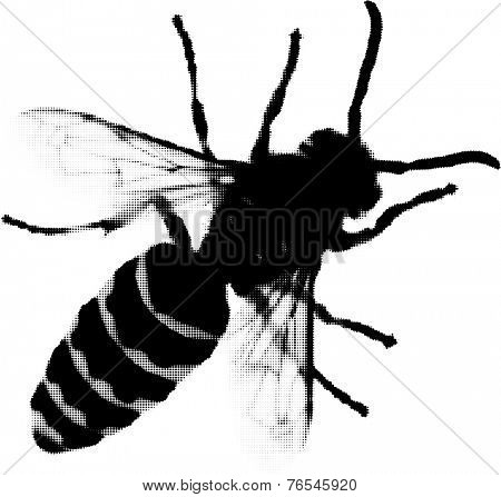 illustration with wasp from dots isolated on white background
