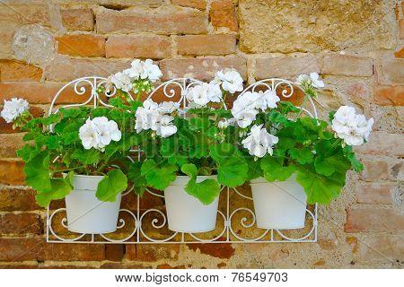 Flowers On A Wall Closeup