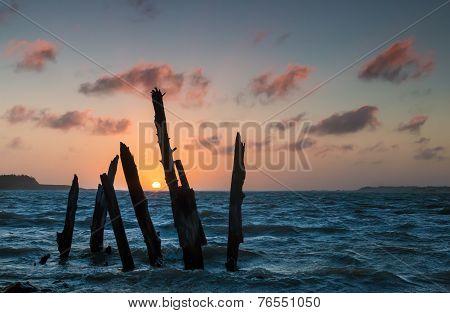 Sunset Tree Posts