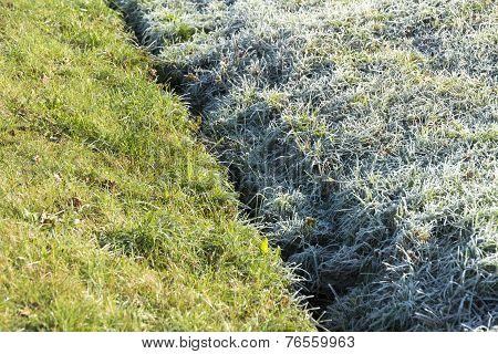 Frost And Defrost Grass