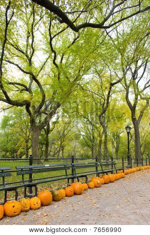 autumnal Central Park New York City USA