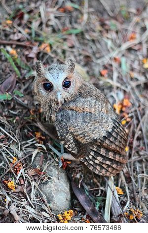 Side view of a owlet