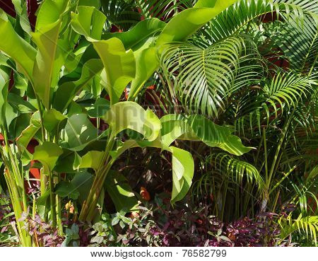 Leafy green plants.