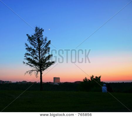 Tree in skyline
