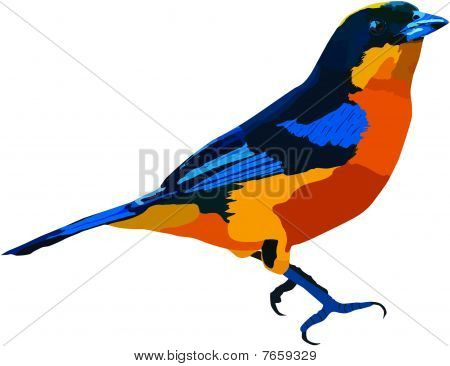 Blue-winged_mountain-tanager_s