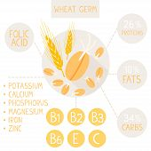 image of germination  - flat infographic useful properties of germinated wheat germ - JPG