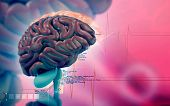 picture of thalamus  - Digital illustration of  brain in colour  background - JPG