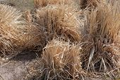 foto of veld  - Close up of desert with dry grass as background - JPG