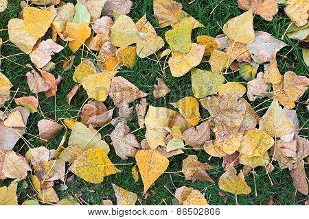 Fallen Tree Leaves On Green Grass